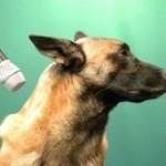L'os à ronger pour les chiens de Michel Schweizer.