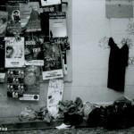 Tadorne, le blog du Festival d'Avignon : où serez-vous ?